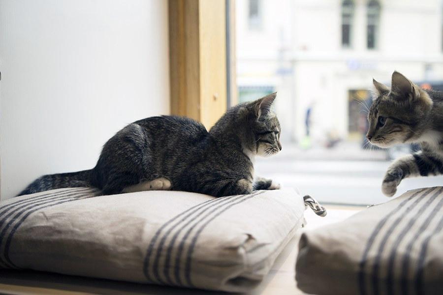 Kissanpennut Helsinki